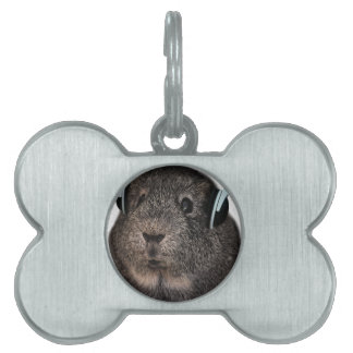 Guinea Pig Music Pet Pet Tag