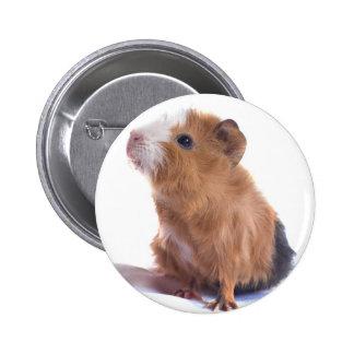 guinea pig pin