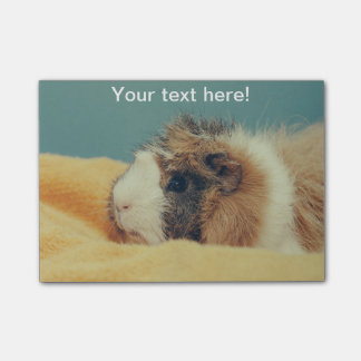 Guinea pig post-it notes