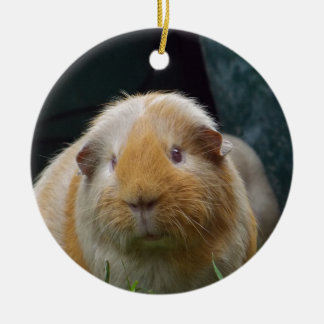 Guinea pig round ceramic decoration