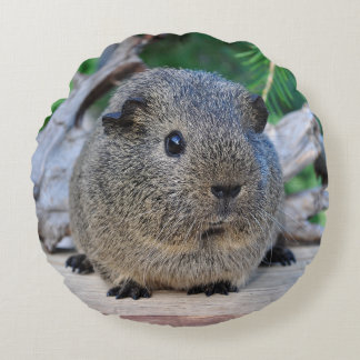 Guinea Pig Round Cushion
