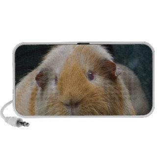 Guinea pig speaker