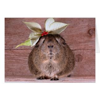 Guinea Pig Sweetheart Card