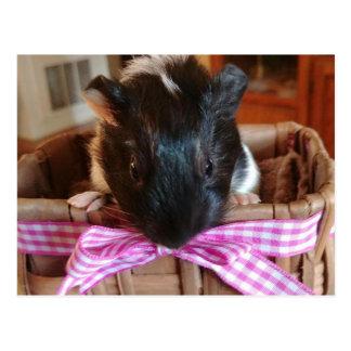 guinea piggy in basket postcard