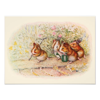 Guinea Pigs and Garden Tools Photographic Print