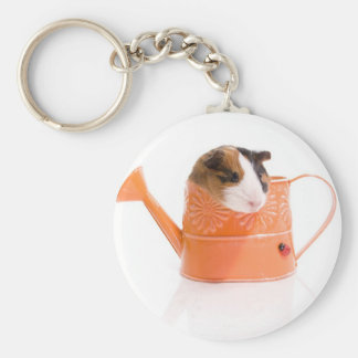 guinea pigs in has watering edge basic round button key ring