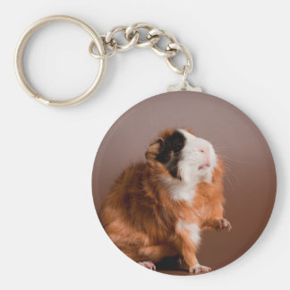 guinea pigs key ring