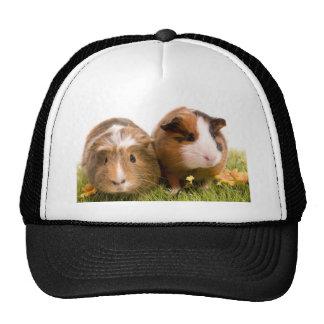 guinea pigs one has lawn cap