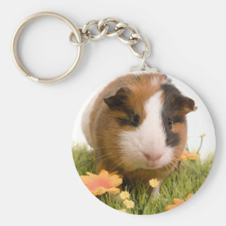guinea pigs one has lawn key ring