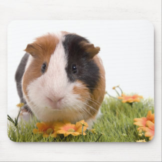 guinea pigs one has lawn mouse mat