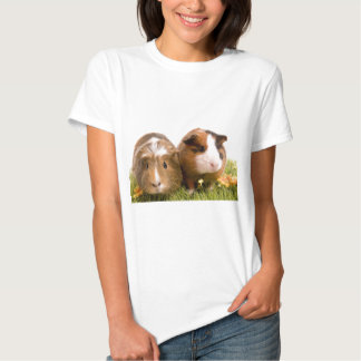 guinea pigs one has lawn tees