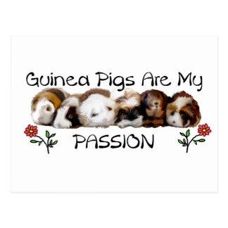 GUINEA PIGS PASSION.jpg Postcard