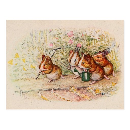 Guinea Pigs Planting in the Garden Postcards