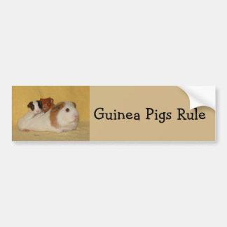 Guinea Pigs Rule Bumper Sticker