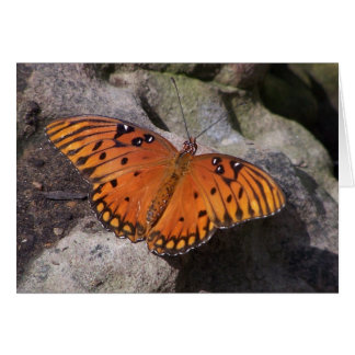 gulf fritillary 2 butterfly greeting card