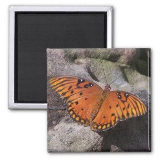 gulf fritillary 2 butterfly fridge magnet
