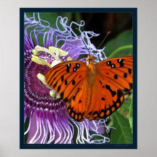 Gulf Fritillary Art Print