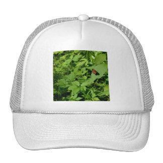 Gulf Fritillary Butterfly-13 Trucker Hats