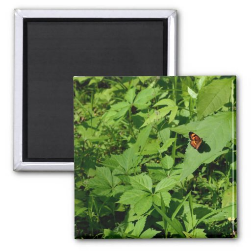 Gulf Fritillary Butterfly-13 Fridge Magnets