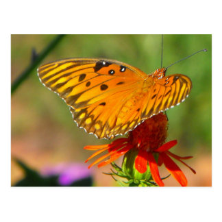 Gulf Fritillary Butterfly and Red Flower Post Card