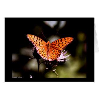 Gulf Fritillary Butterfly Card