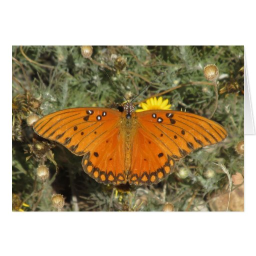 Gulf Fritillary Butterfly Cards