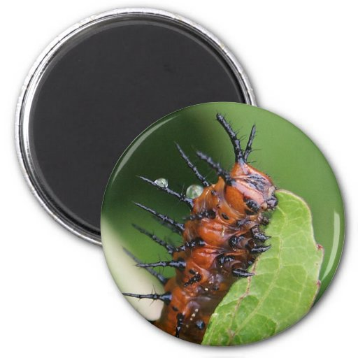 Gulf Fritillary Butterfly Caterpillar Magnet