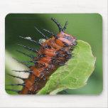 Gulf Fritillary Butterfly Caterpillar Mouse Pad