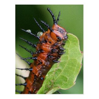 Gulf Fritillary Butterfly Caterpillar Postcard