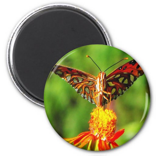Gulf Fritillary Butterfly Front View Magnets