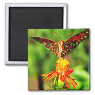 Gulf Fritillary Butterfly Front View Square Magnet