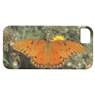 Gulf Fritillary Butterfly iPhone 5 Case