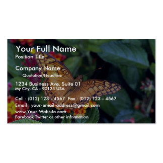 Gulf fritillary butterfly, Mexico Business Card Templates