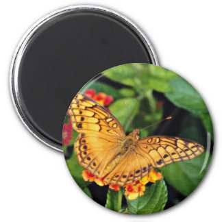 Gulf fritillary butterfly, Mexico  flowers Magnet