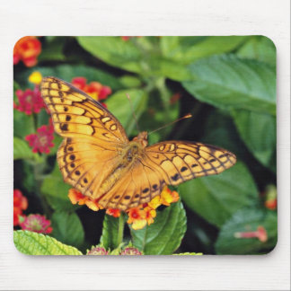 Gulf fritillary butterfly Mexico flowers Mousepads