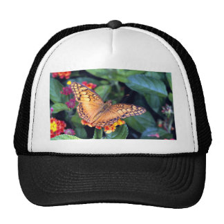 Gulf fritillary butterfly, Mexico Mesh Hats