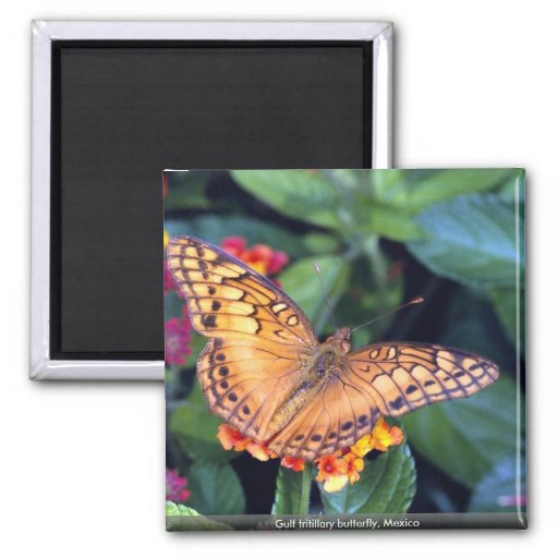Gulf fritillary butterfly, Mexico Magnets