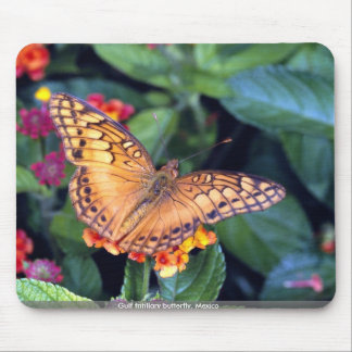 Gulf fritillary butterfly Mexico Mouse Pads
