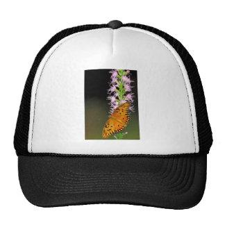 Gulf fritillary butterfly on Dense blazingstar Hats