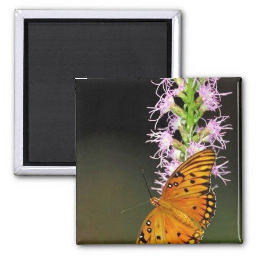 Gulf fritillary butterfly on Dense blazingstar Magnets