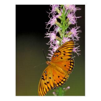 Gulf Fritillary butterfly on Dense Blazingstar Postcard
