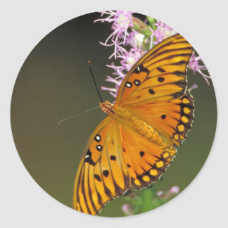 Gulf Fritillary butterfly on Dense Blazingstar Round Sticker
