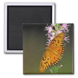 Gulf Fritillary butterfly on Dense Blazingstar Square Magnet