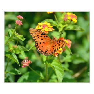 Gulf Fritillary Butterfly Photo Art