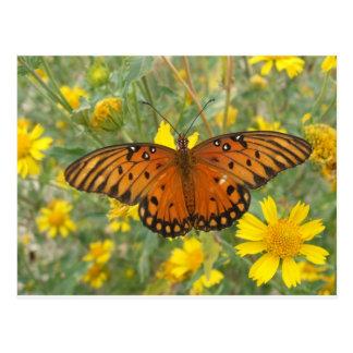 Gulf Fritillary Butterfly Post Cards