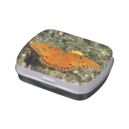 Gulf Fritillary Butterfly Jelly Belly Candy Tins