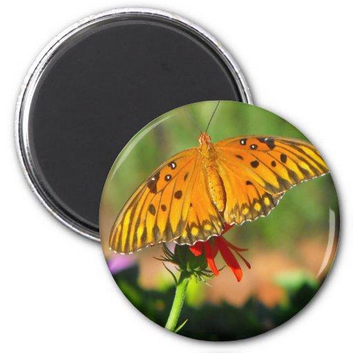 Gulf Fritillary Butterfly Upclose Magnet