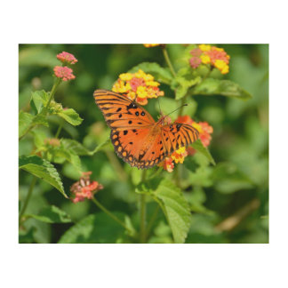 Gulf Fritillary Butterfly Wood Canvases