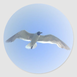 Gull in Flight 2 Sticker