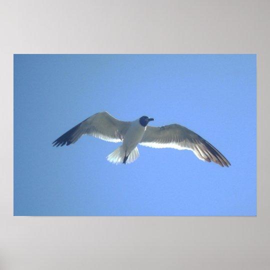 Gull in Flight Print